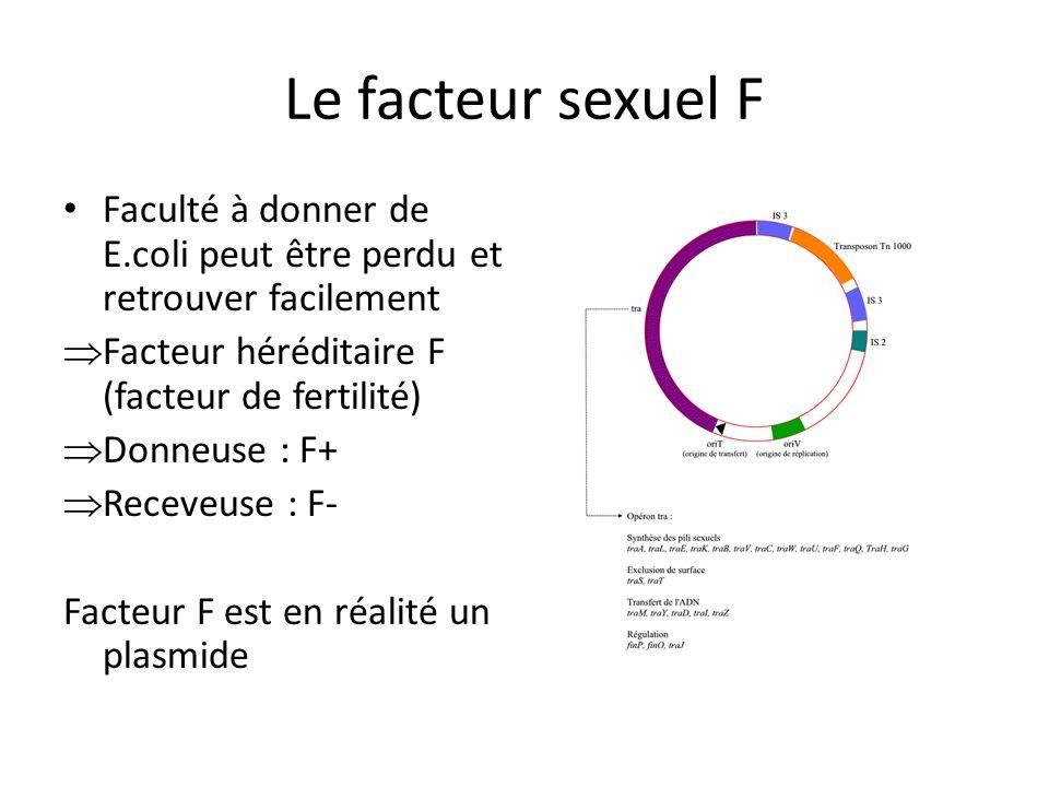 Le facteur sexuel F Faculté à donner de E.coli peut être perdu et retrouver facilement. Facteur héréditaire F (facteur de fertilité)