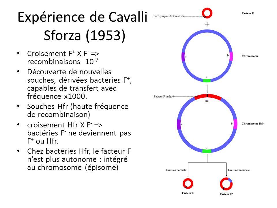 Expérience de Cavalli-Sforza (1953)