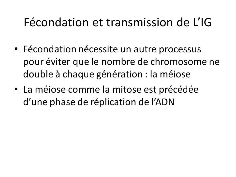 Fécondation et transmission de L'IG