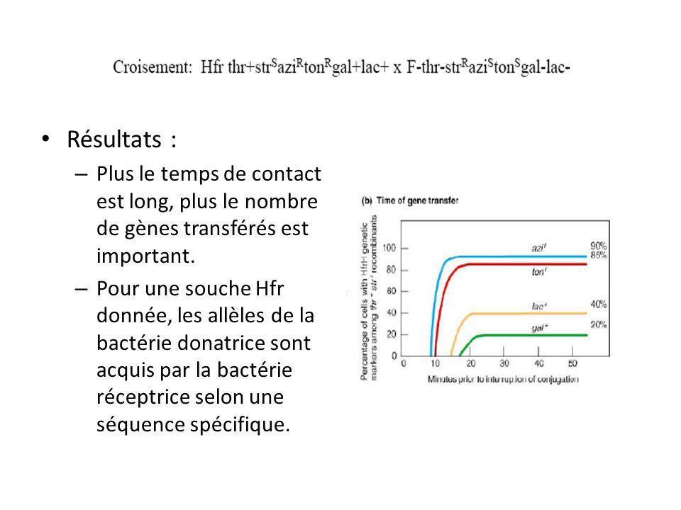 Résultats : Plus le temps de contact est long, plus le nombre de gènes transférés est important.