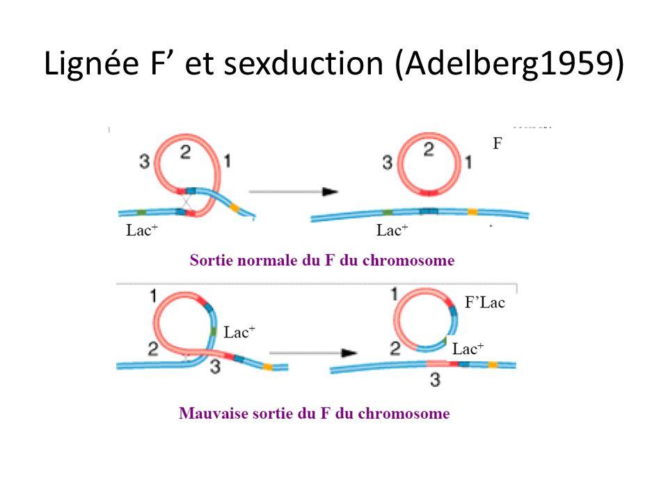 Lignée F' et sexduction (Adelberg1959)