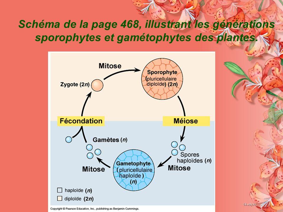 Schéma de la page 468, illustrant les générations sporophytes et gamétophytes des plantes.