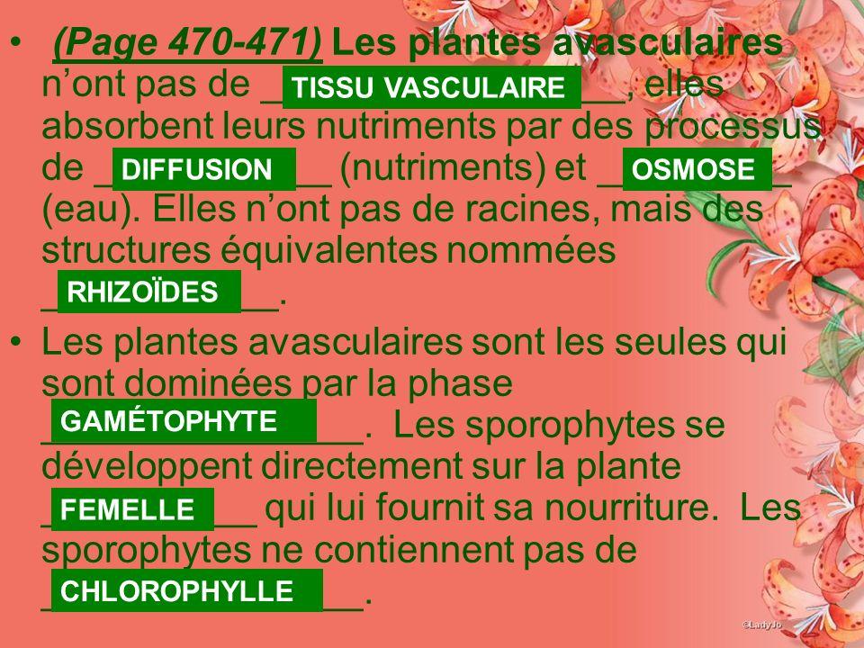 (Page 470-471) Les plantes avasculaires n'ont pas de _________________, elles absorbent leurs nutriments par des processus de ___________ (nutriments) et _________ (eau). Elles n'ont pas de racines, mais des structures équivalentes nommées ___________.