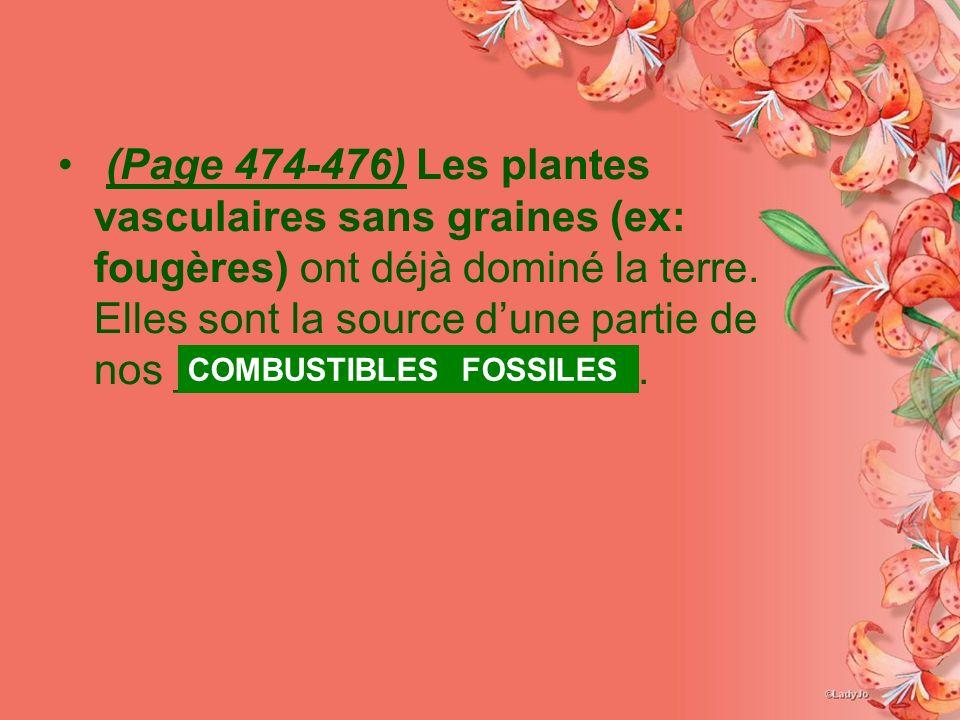(Page 474-476) Les plantes vasculaires sans graines (ex: fougères) ont déjà dominé la terre. Elles sont la source d'une partie de nos _____________ ______.
