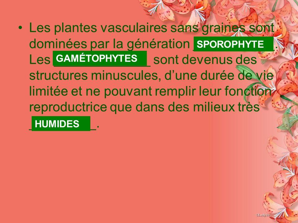 Les plantes vasculaires sans graines sont dominées par la génération ___________. Les _____________ sont devenus des structures minuscules, d'une durée de vie limitée et ne pouvant remplir leur fonction reproductrice que dans des milieux très _________.