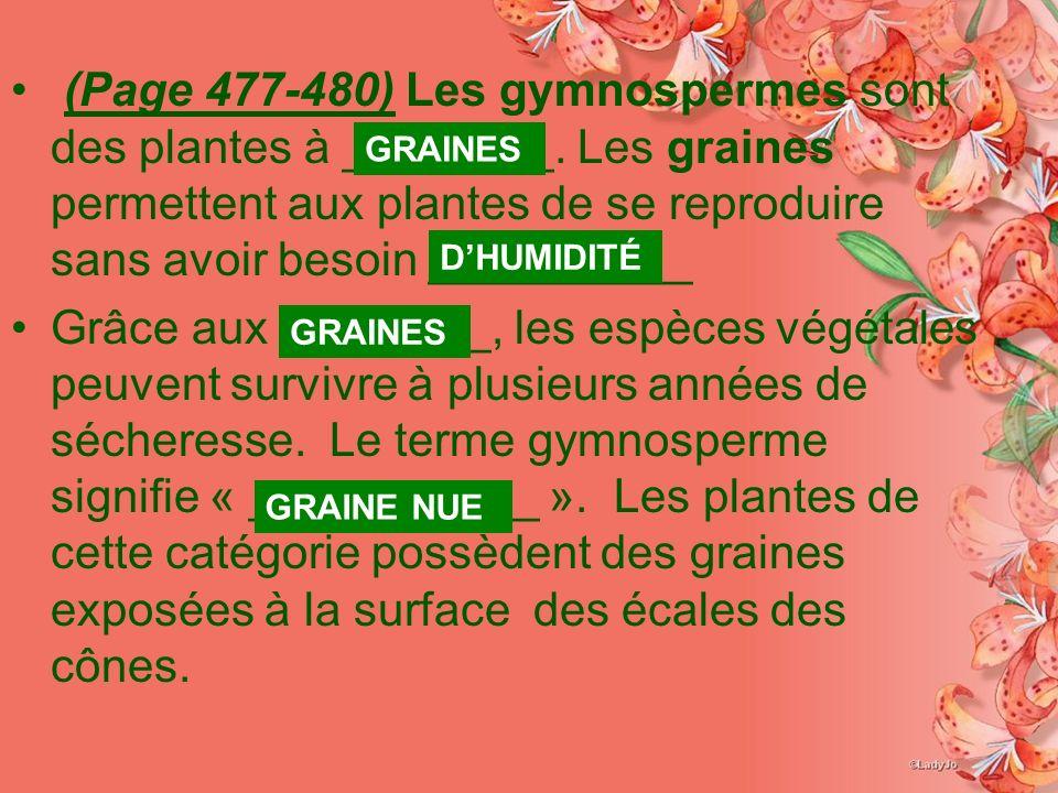 (Page 477-480) Les gymnospermes sont des plantes à ________
