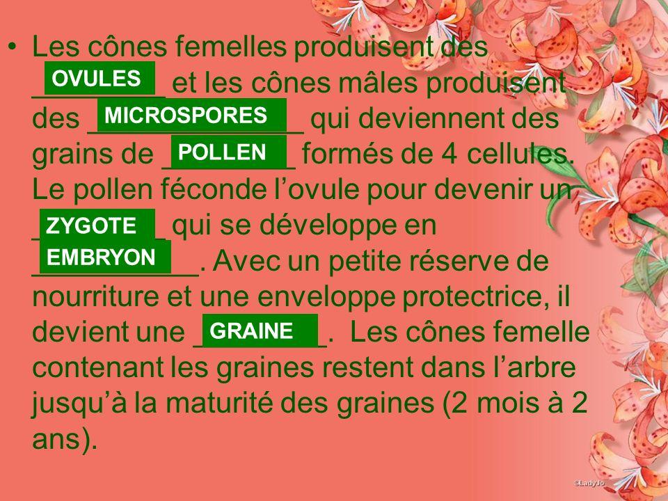 Les cônes femelles produisent des ________ et les cônes mâles produisent des _____________ qui deviennent des grains de ________ formés de 4 cellules. Le pollen féconde l'ovule pour devenir un ________ qui se développe en __________. Avec un petite réserve de nourriture et une enveloppe protectrice, il devient une ________. Les cônes femelle contenant les graines restent dans l'arbre jusqu'à la maturité des graines (2 mois à 2 ans).