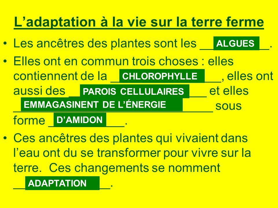L'adaptation à la vie sur la terre ferme