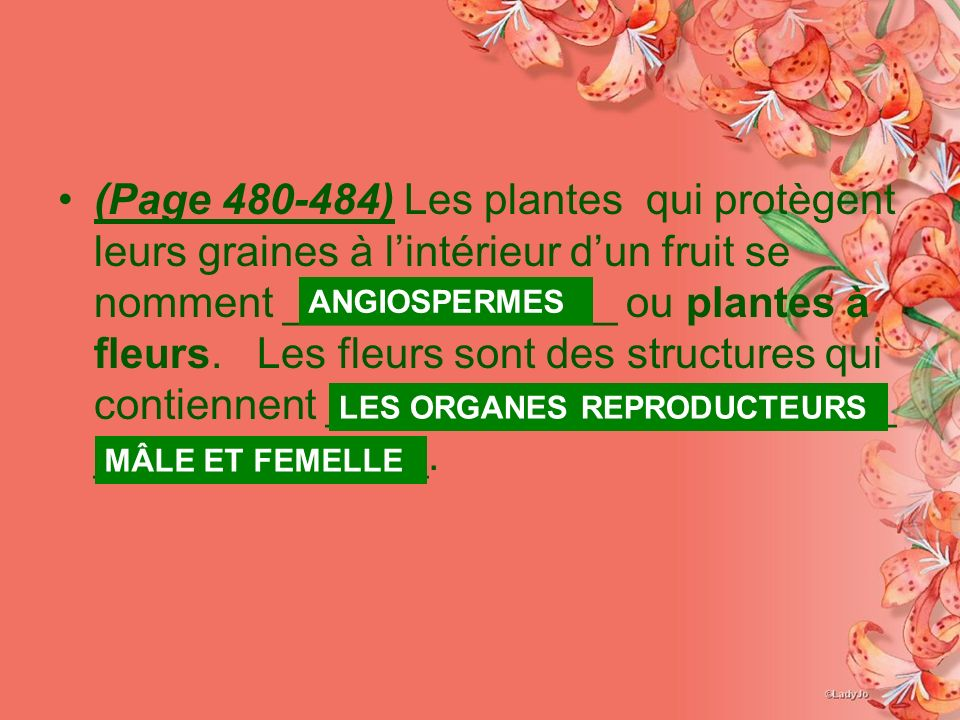 la diversit chez les plantes pages 464 484 ppt video online t l charger. Black Bedroom Furniture Sets. Home Design Ideas