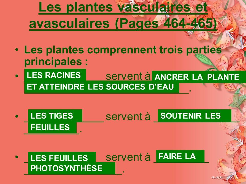 Les plantes vasculaires et avasculaires (Pages 464-465)
