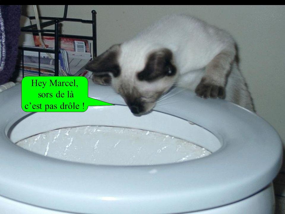 Hey Marcel, sors de là c'est pas drôle !