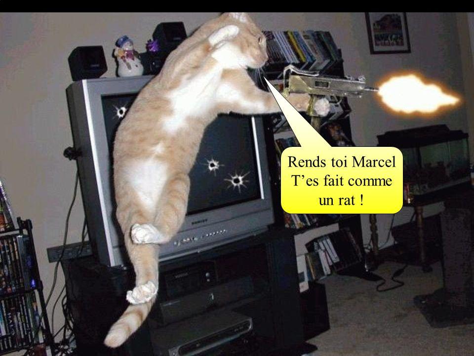 Rends toi Marcel T'es fait comme un rat !