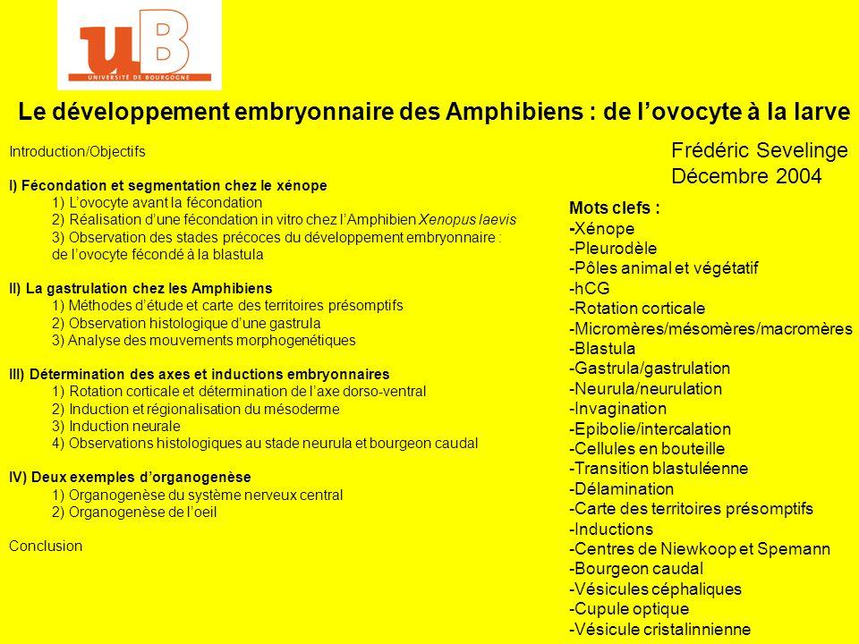 Le développement embryonnaire des Amphibiens : de l'ovocyte à la larve