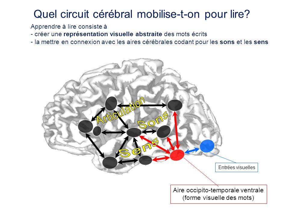 Quel circuit cérébral mobilise-t-on pour lire