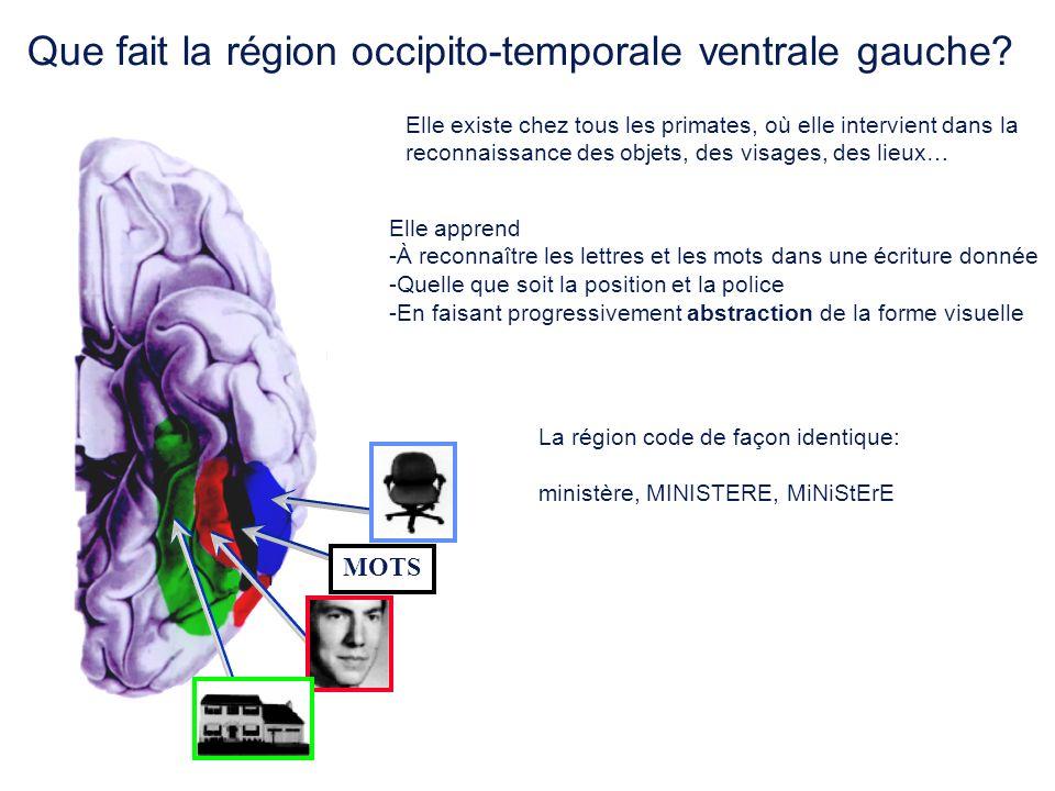 Que fait la région occipito-temporale ventrale gauche
