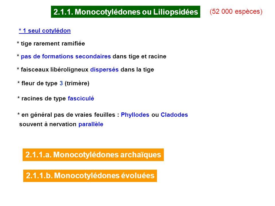 2.1.1. Monocotylédones ou Liliopsidées