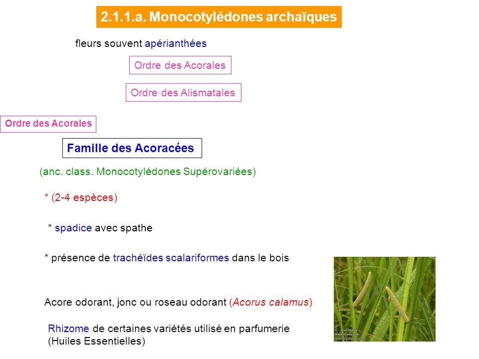 2.1.1.a. Monocotylédones archaïques
