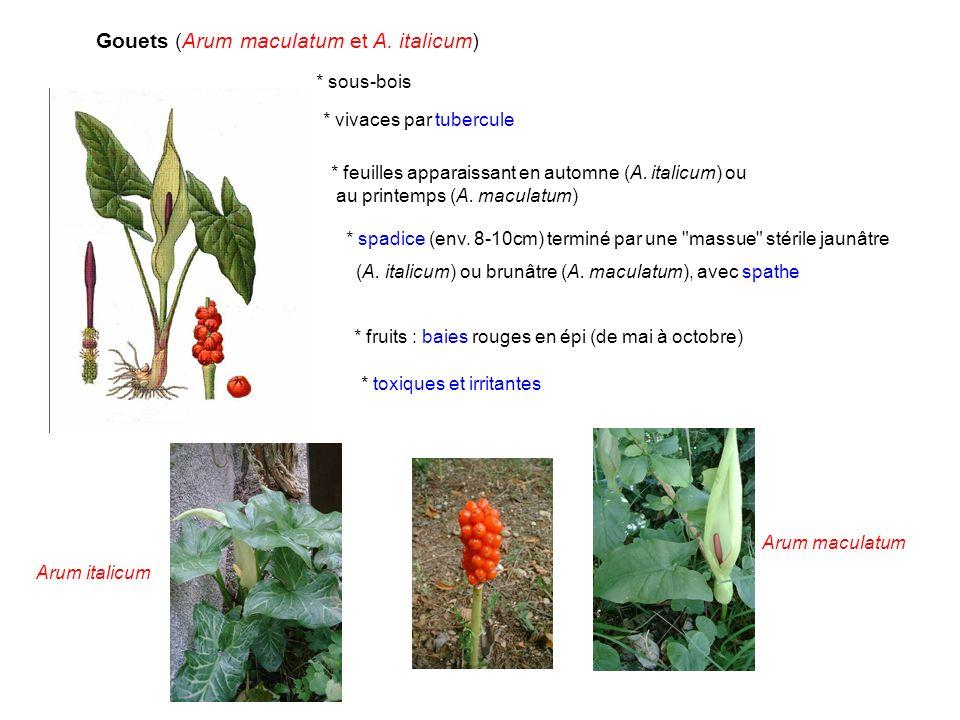 Gouets (Arum maculatum et A. italicum)