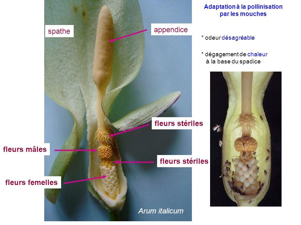 Adaptation à la pollinisation