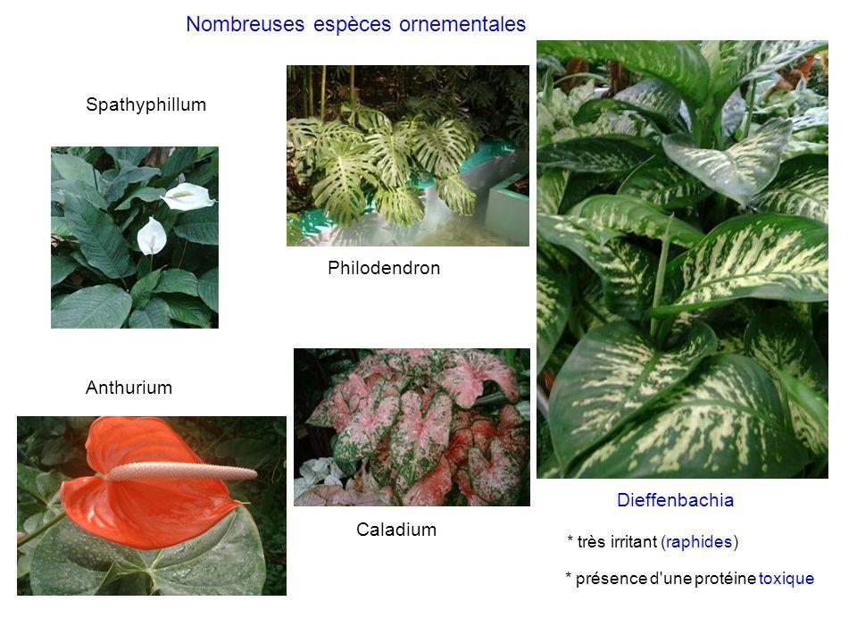 Nombreuses espèces ornementales