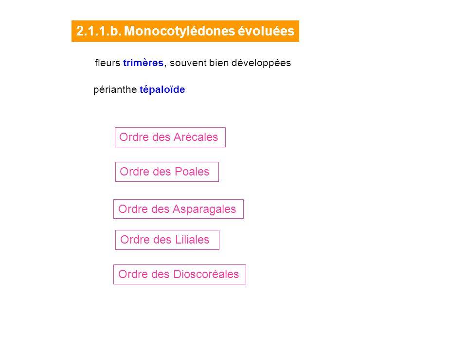 2.1.1.b. Monocotylédones évoluées