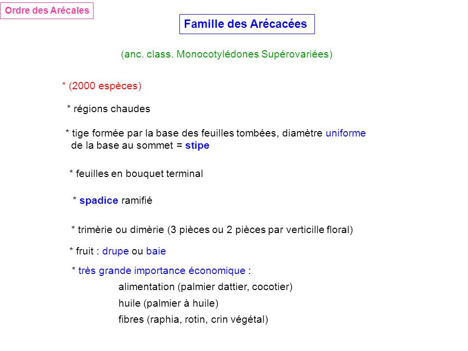 Famille des Arécacées (anc. class. Monocotylédones Supérovariées)