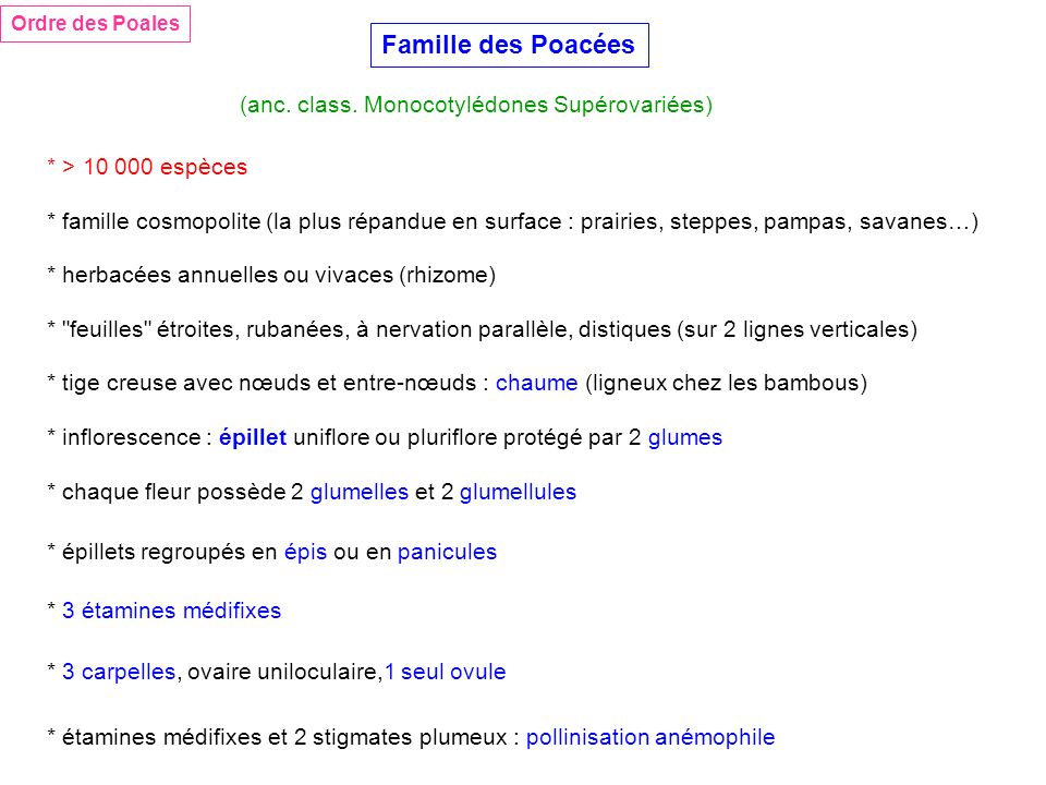 Famille des Poacées (anc. class. Monocotylédones Supérovariées)