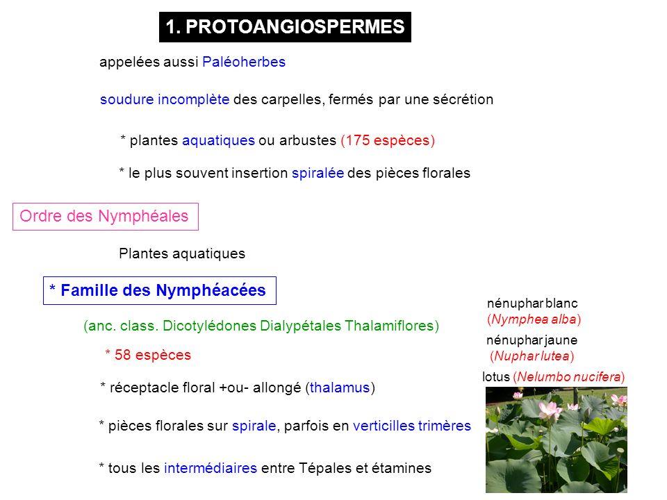 1. PROTOANGIOSPERMES Ordre des Nymphéales * Famille des Nymphéacées