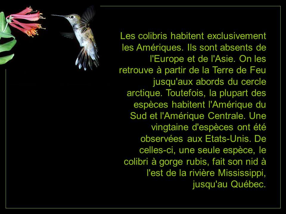 Les colibris habitent exclusivement les Amériques