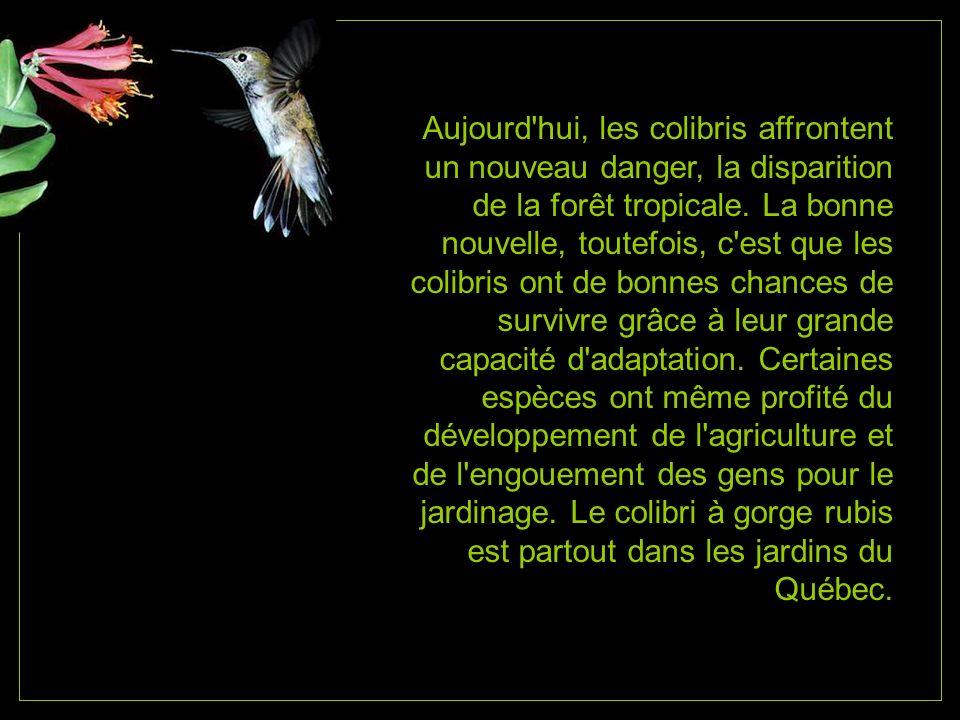 Aujourd hui, les colibris affrontent un nouveau danger, la disparition de la forêt tropicale.