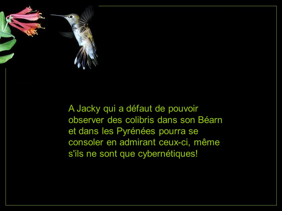 A Jacky qui a défaut de pouvoir observer des colibris dans son Béarn et dans les Pyrénées pourra se consoler en admirant ceux-ci, même s ils ne sont que cybernétiques!