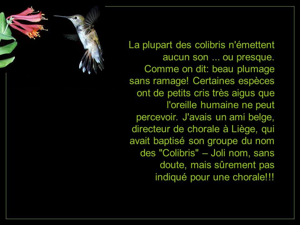 La plupart des colibris n émettent aucun son. ou presque