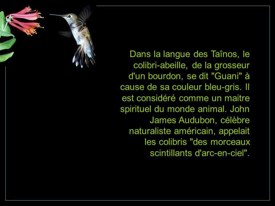 Dans la langue des Taînos, le colibri-abeille, de la grosseur d un bourdon, se dit Guani à cause de sa couleur bleu-gris.