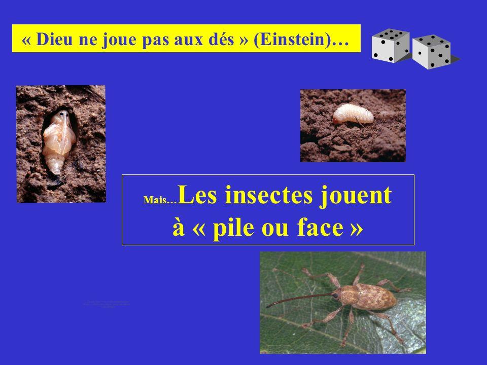 Mais…Les insectes jouent « Dieu ne joue pas aux dés » (Einstein)…