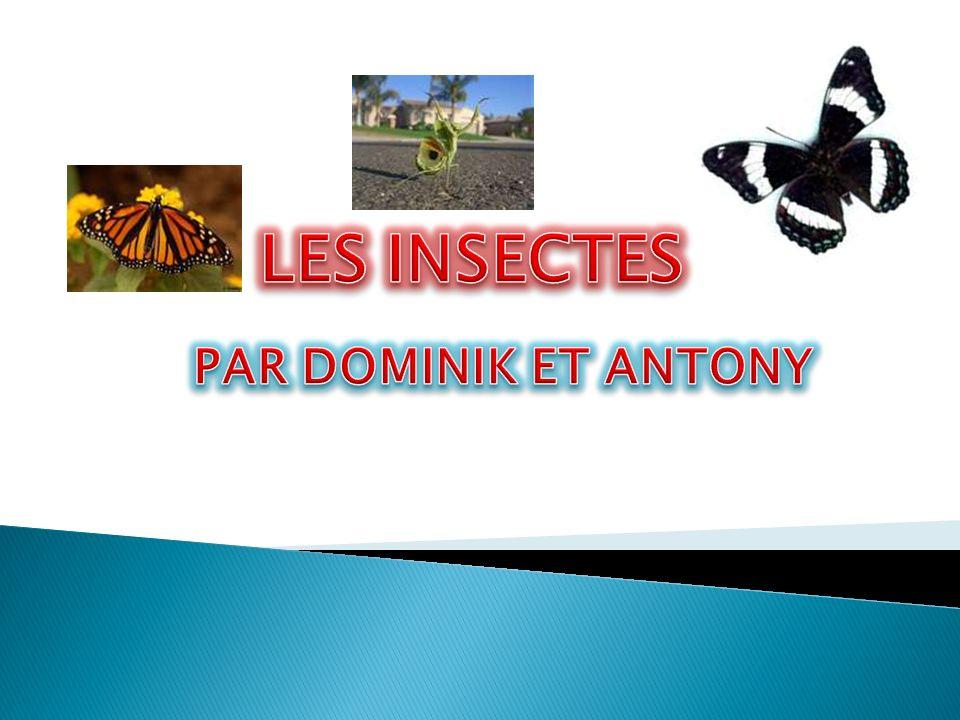 LES INSECTES PAR DOMINIK ET ANTONY