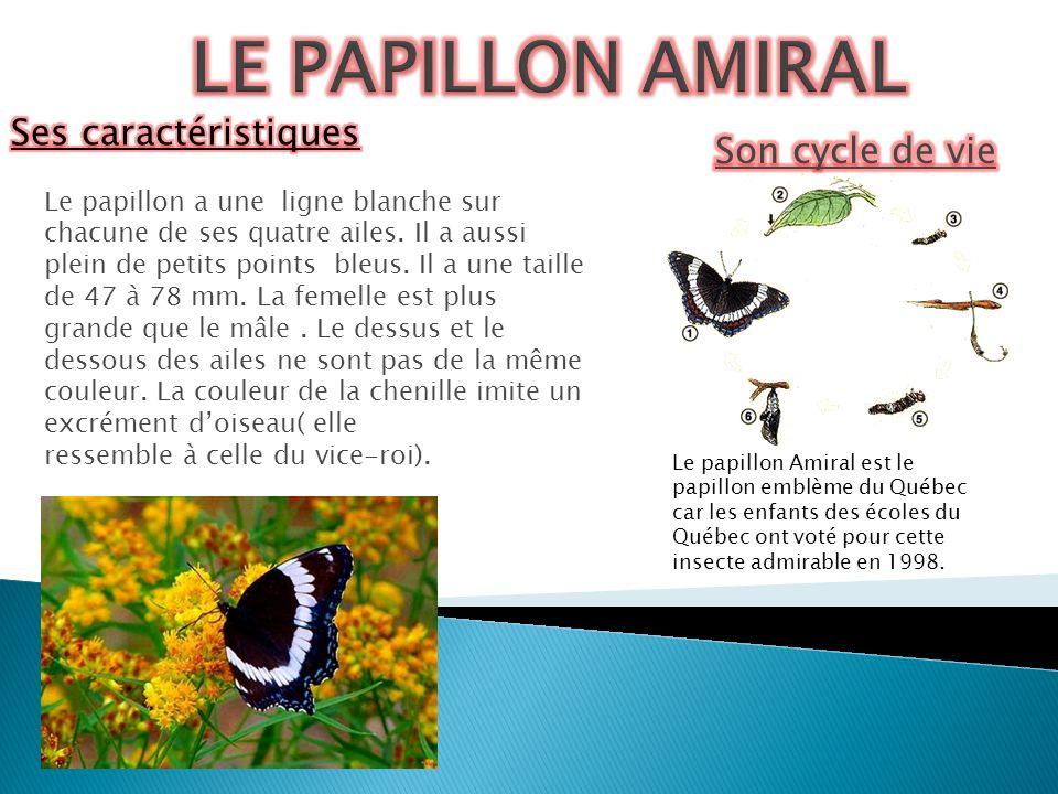 LE PAPILLON AMIRAL Ses caractéristiques Son cycle de vie