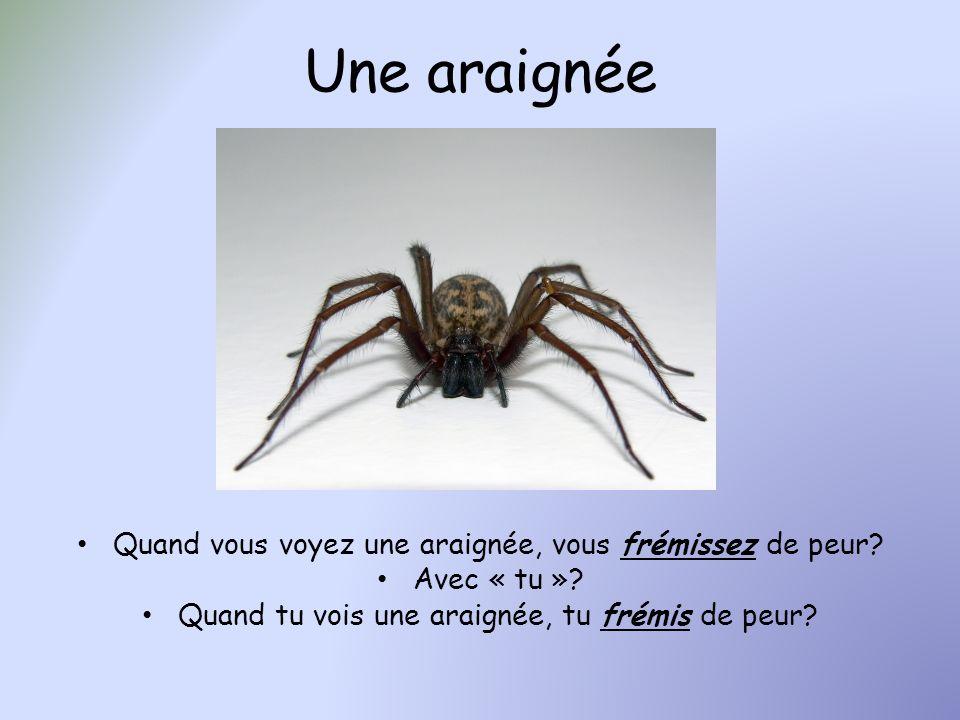 Une araignée Quand vous voyez une araignée, vous frémissez de peur
