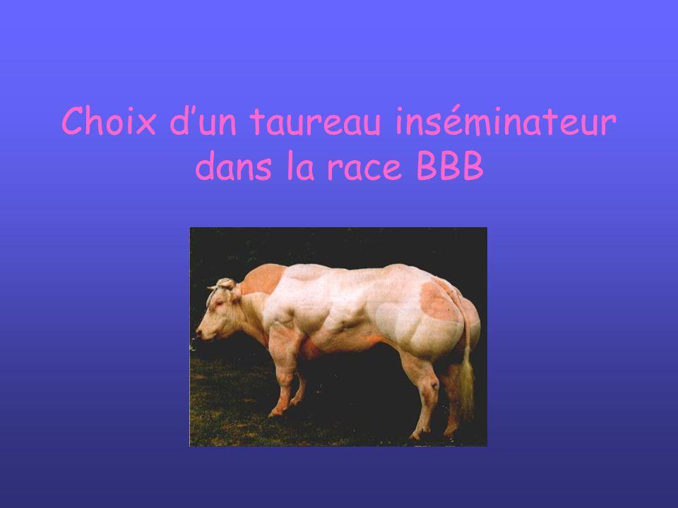 Choix d'un taureau inséminateur dans la race BBB