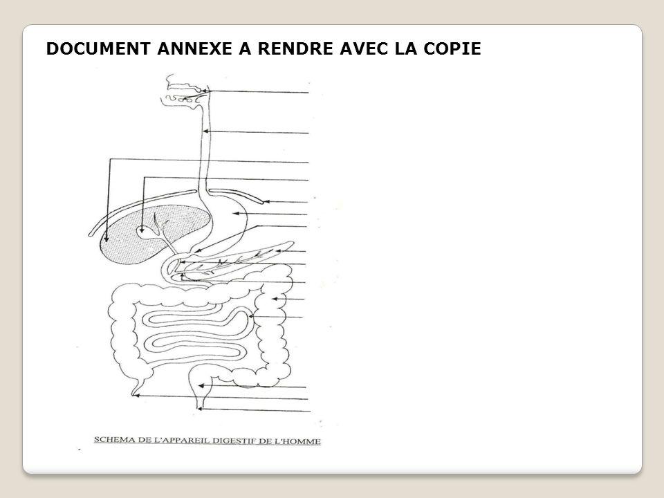 DOCUMENT ANNEXE A RENDRE AVEC LA COPIE