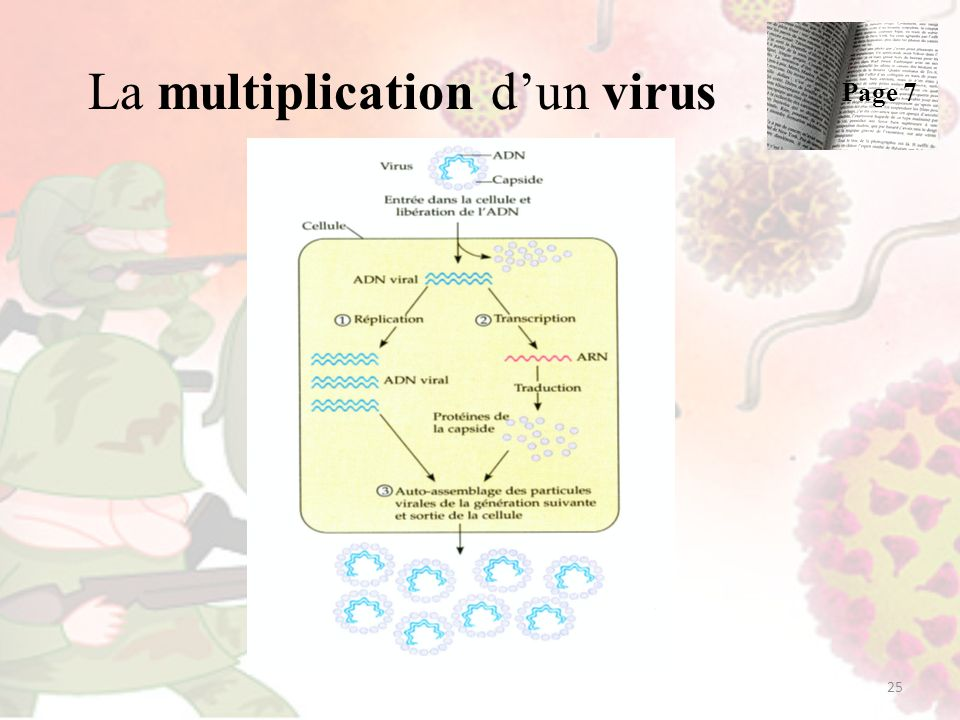 La multiplication d'un virus