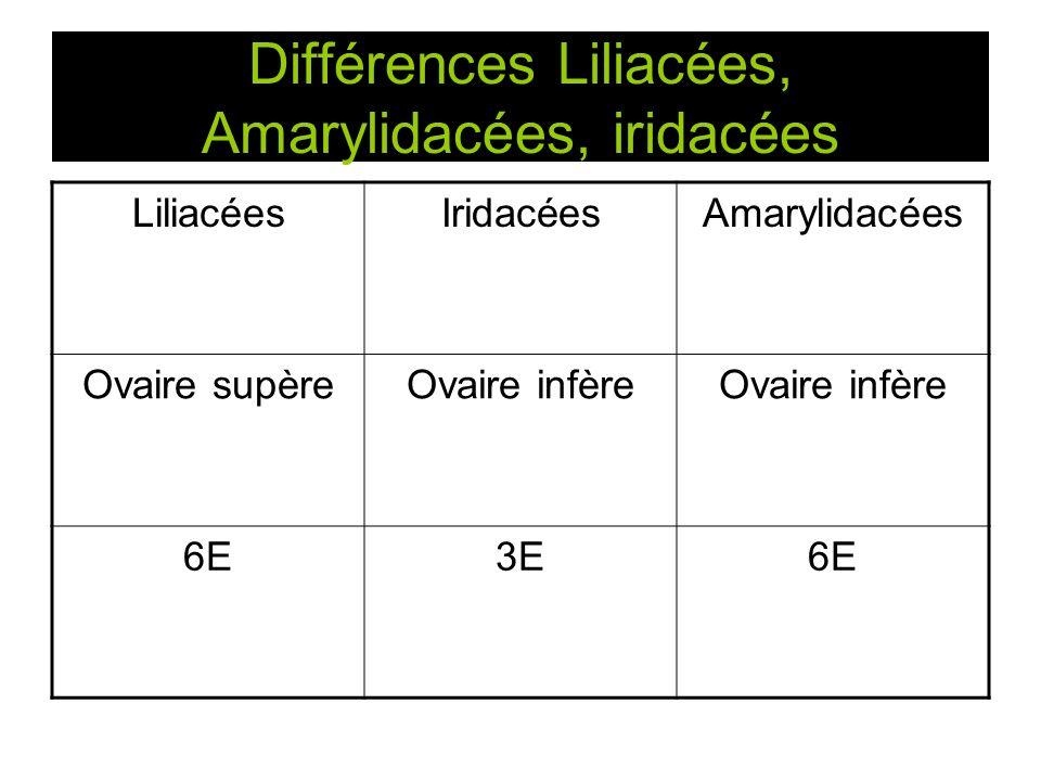 Différences Liliacées, Amarylidacées, iridacées