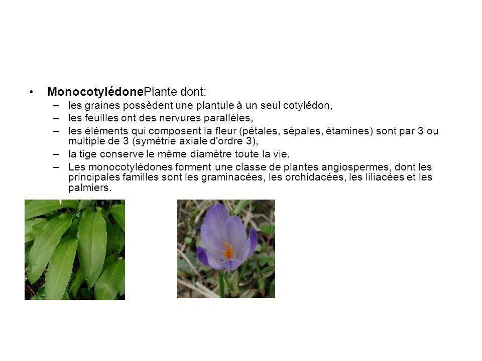 MonocotylédonePlante dont: