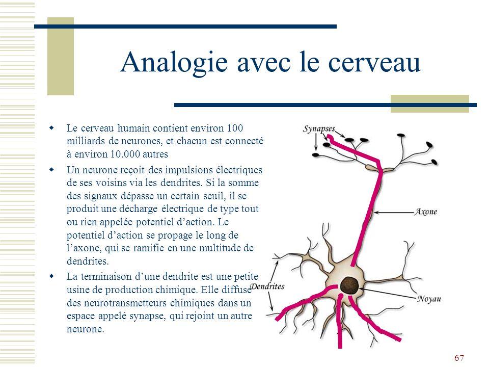 Analogie avec le cerveau