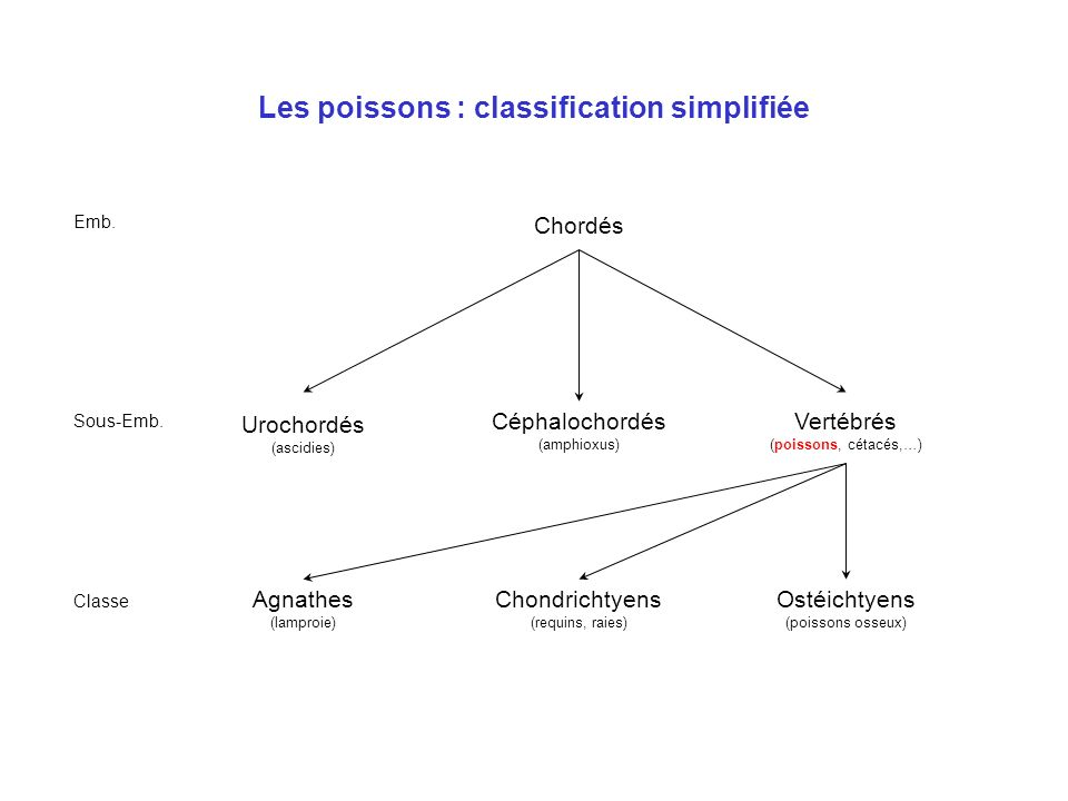 Les poissons : classification simplifiée