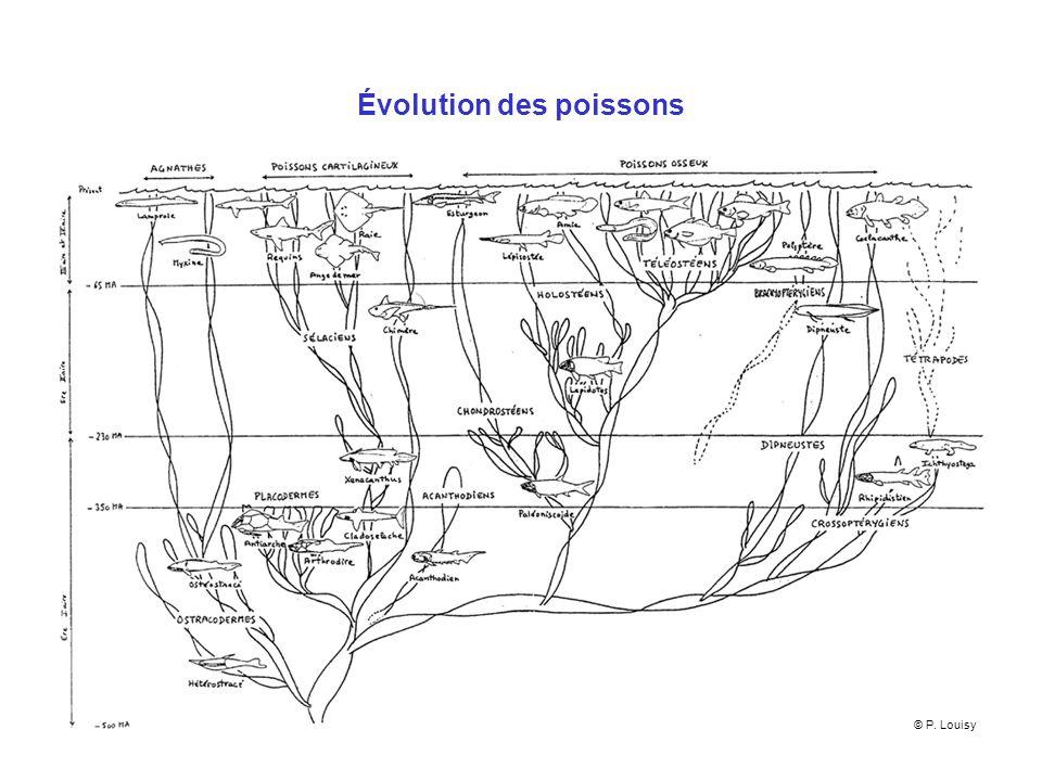Évolution des poissons