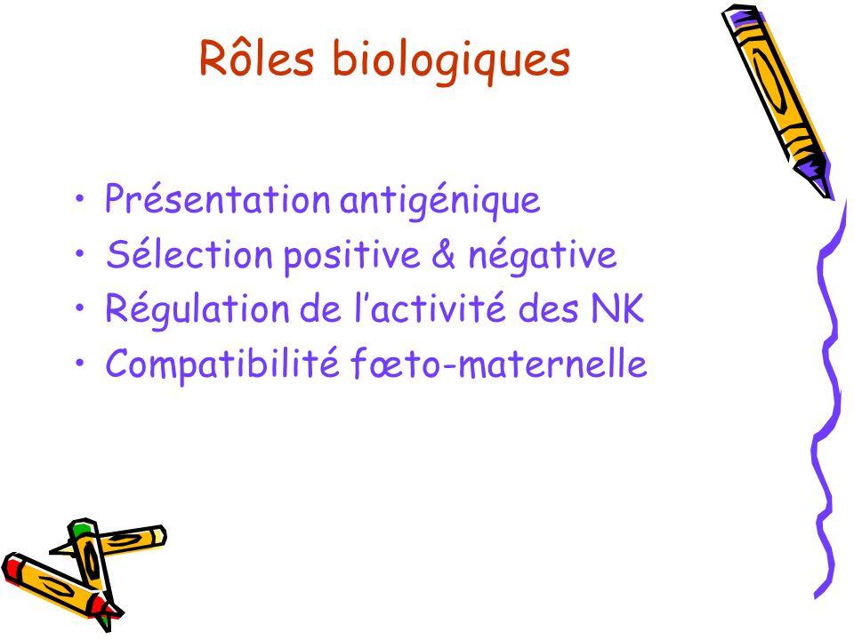 Rôles biologiques Présentation antigénique
