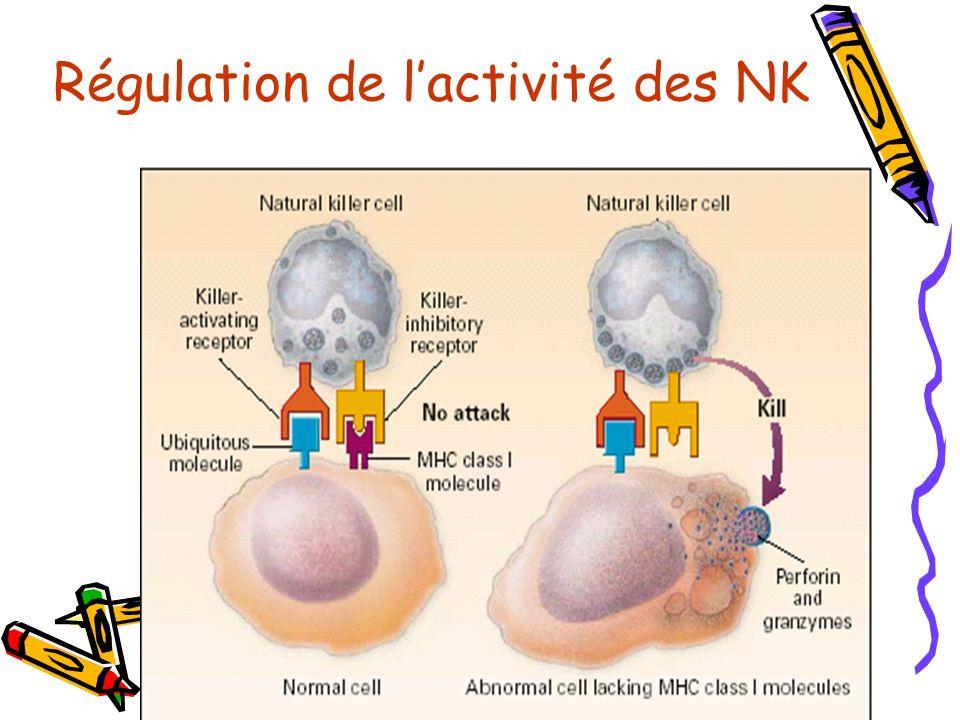 Régulation de l'activité des NK