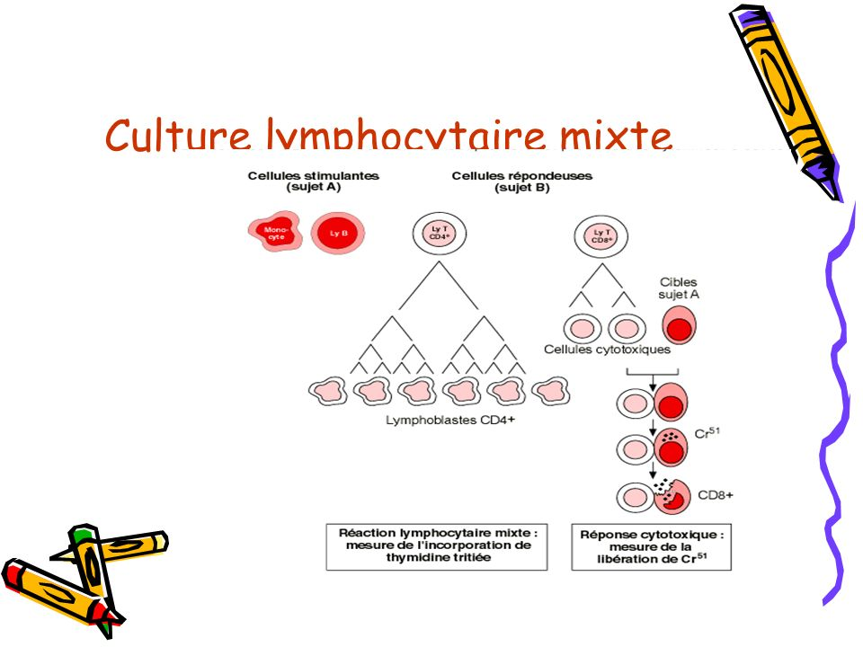 Culture lymphocytaire mixte