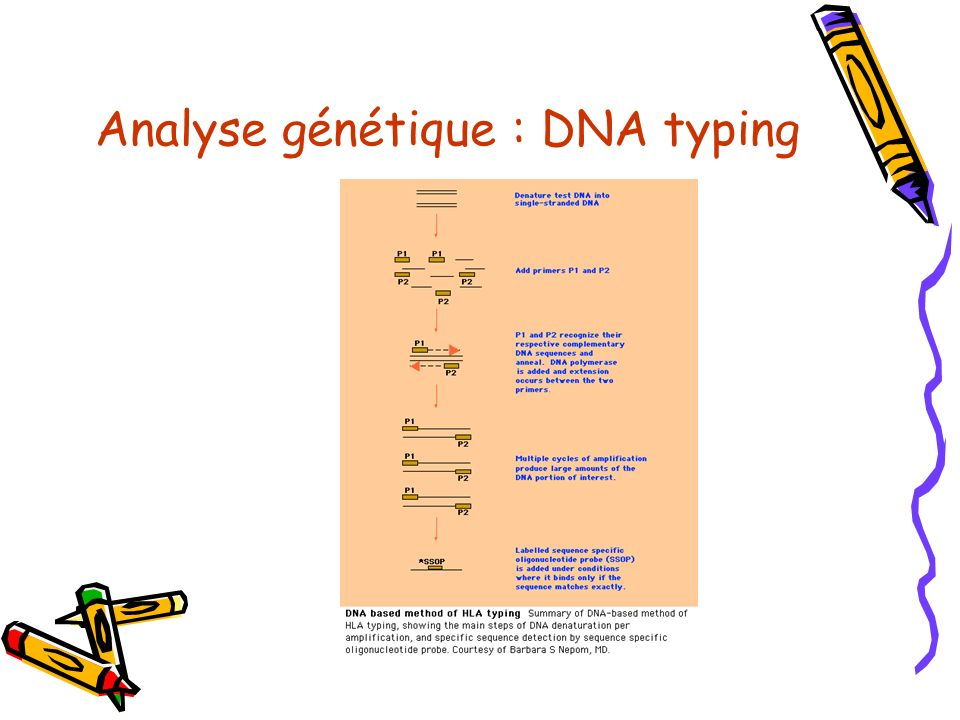 Analyse génétique : DNA typing