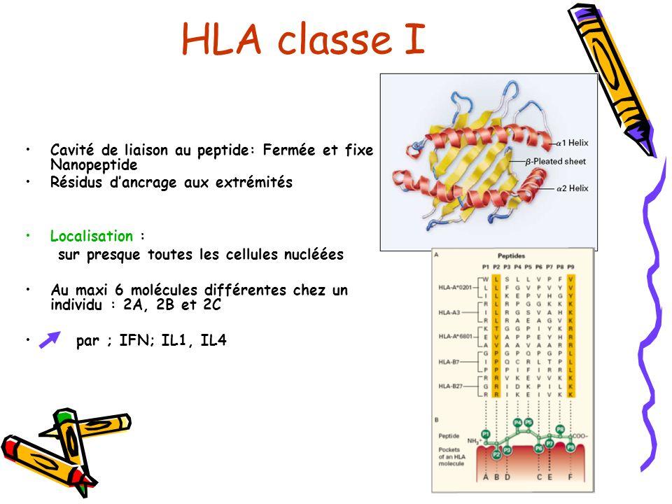 HLA classe I Cavité de liaison au peptide: Fermée et fixe 1 Nanopeptide. Résidus d'ancrage aux extrémités.
